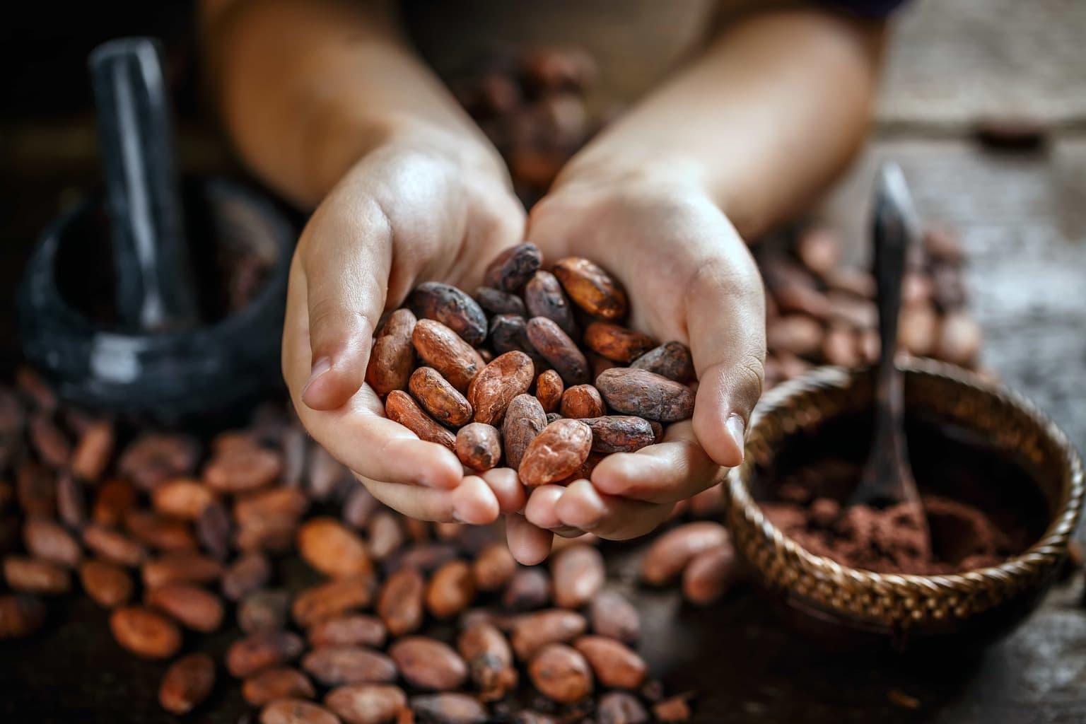 Licensed Adobe cacao cacao ceremony